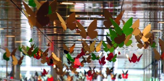 27 butterflies-storm